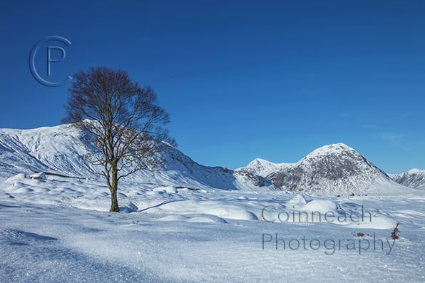 image of tree in winter in Glencoe