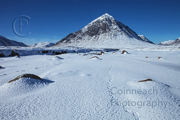 image of animal tracks leading to Buchaille Etive Mhor in winter